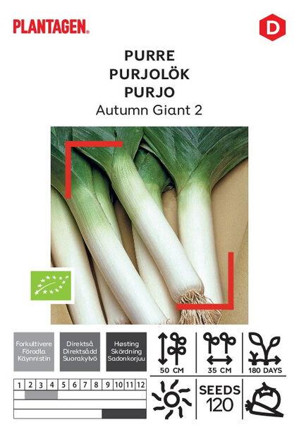 Purjolök 'Autumn Giant 2'
