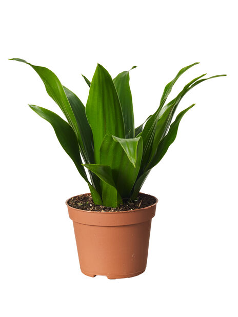 Grönväxtmix mini , Höjd 7 cm, Grön