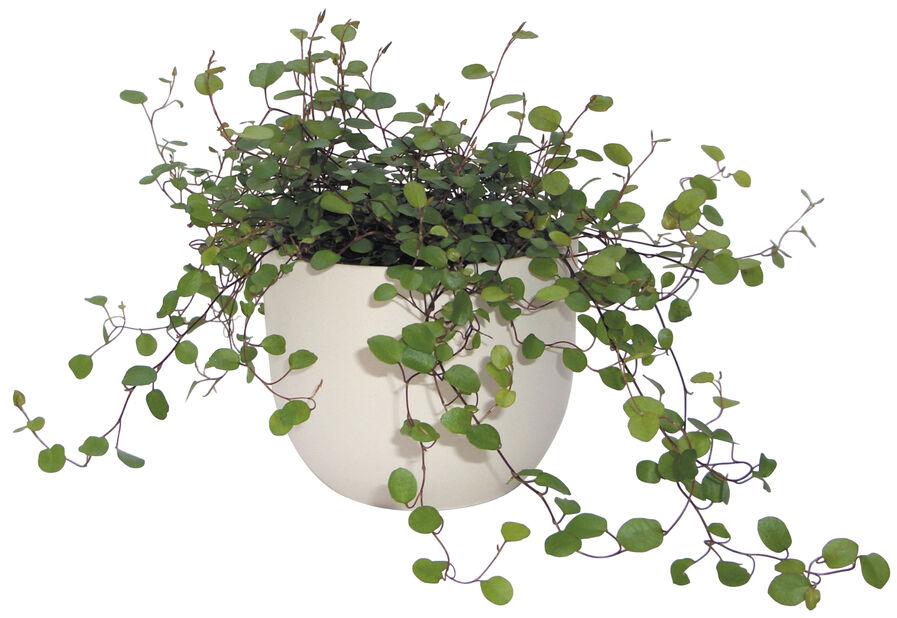 Plättar i luften , Höjd 10 cm, Grön