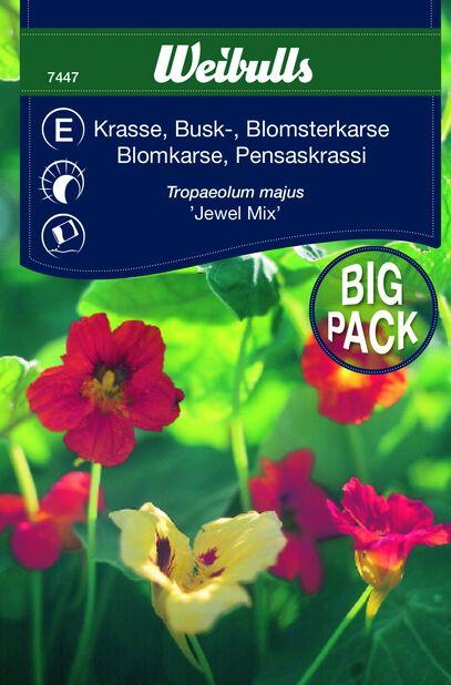 Krasse busk Juwel Mix