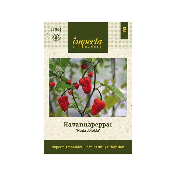 Havannapeppar 'Naga Jolokia', Röd