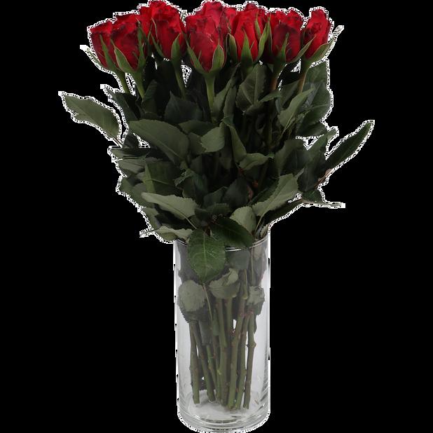 Rosor, Höjd 40 cm, Flera färger