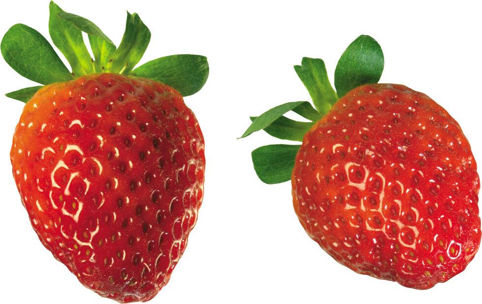 Jordgubbe 'Delizz' , Höjd 25 cm, Röd