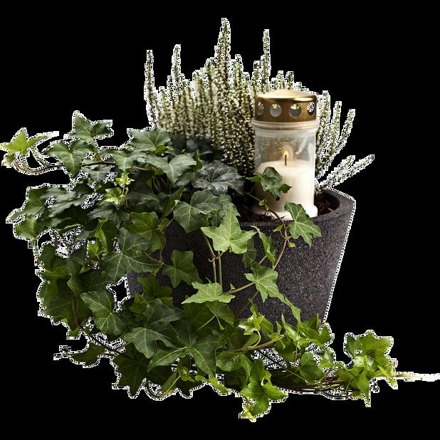 Växtgrupp Allhelgona