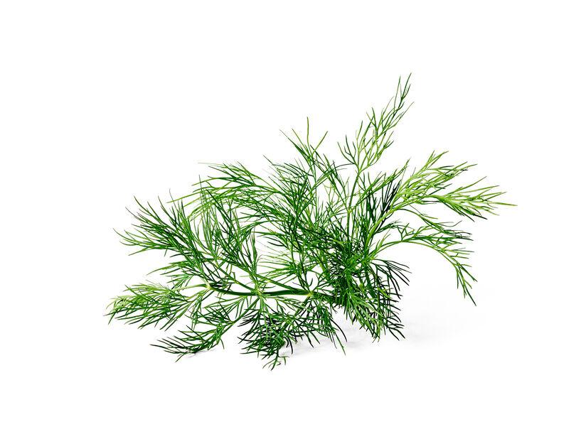 Dill KRAV, Ø10.5 cm, Grön