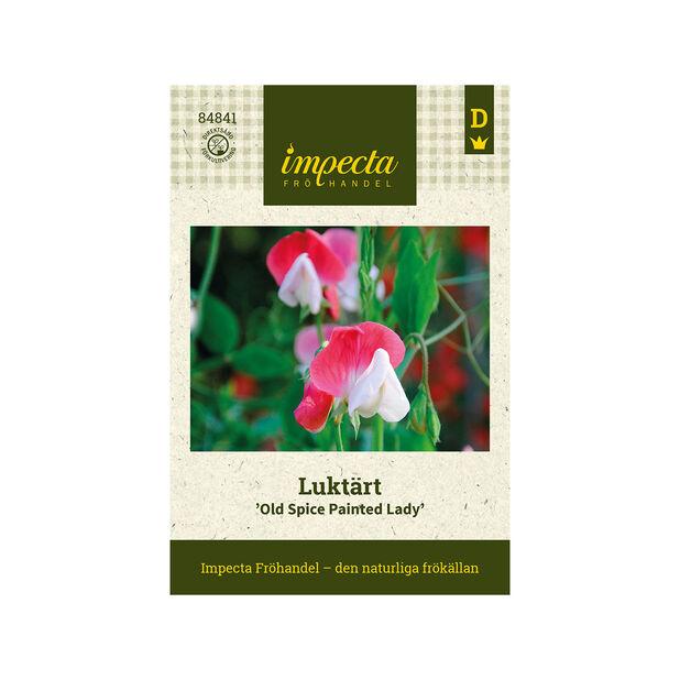 Luktärt 'Old Spice Painted Lady', Rosa
