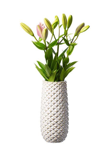 Liljor , Höjd 60 cm, Flera färger