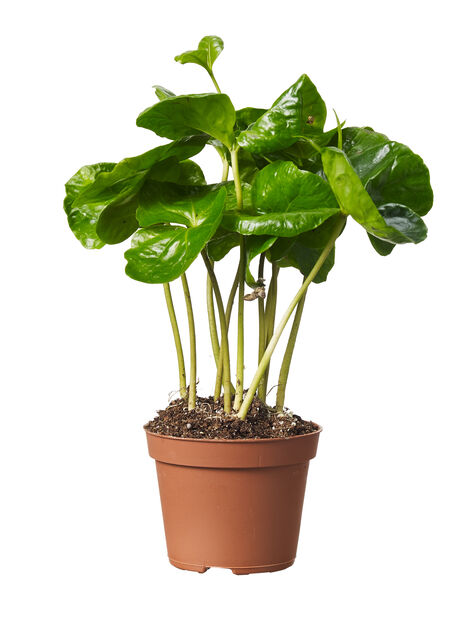 Grönväxtmix, mini, nr 8