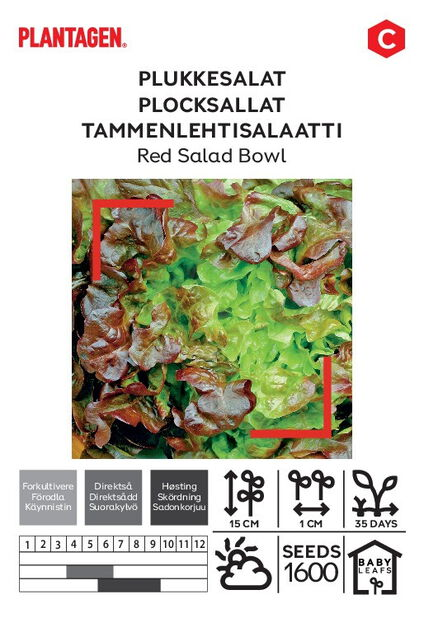 Sallat 'Red Salad Bowl'