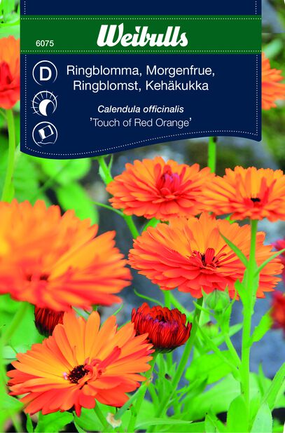 Ringblomma 'Touch of Red Orange'