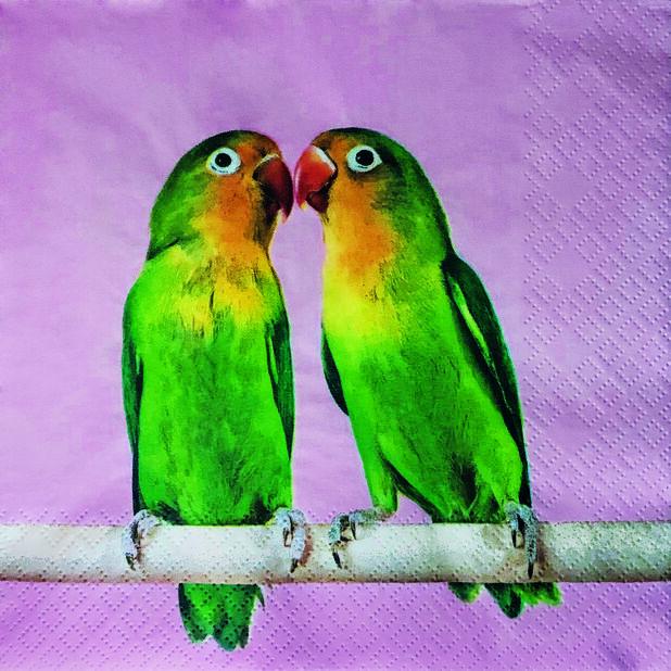 Servetter papegoja, Bredd 33 cm, Rosa