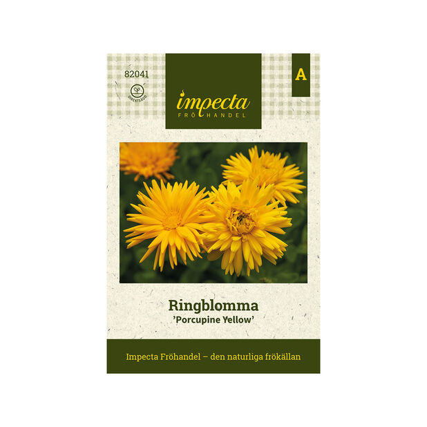 Ringblomma 'Porcupine Yellow', Gul