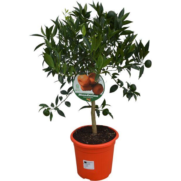 Mandarin, Ø21 cm, Orange