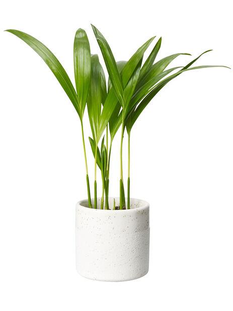 Grönväxtmix, mini, nr 7