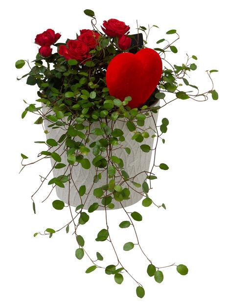 Blomgrupp miniros, Röd