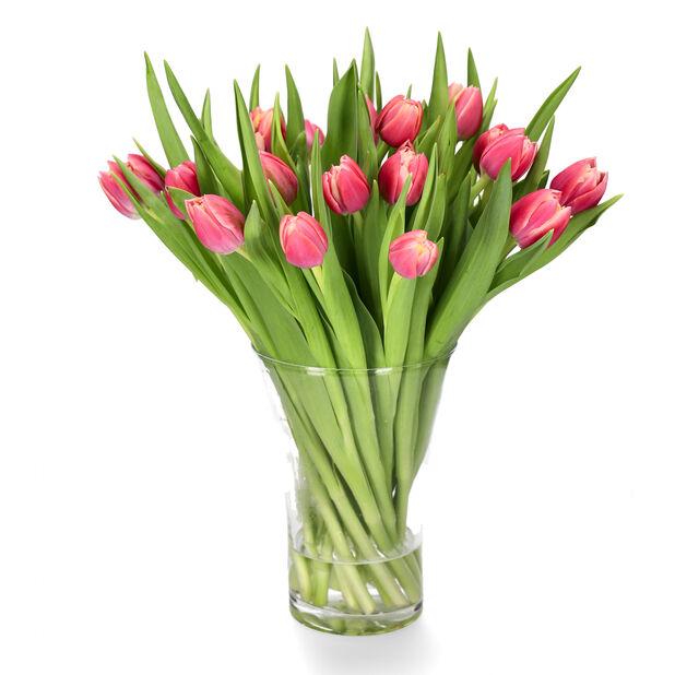 Tulpaner, Höjd 38 cm, Flera färger