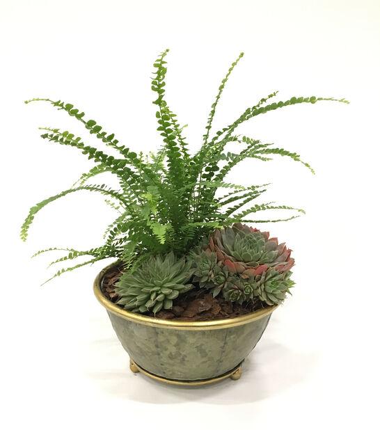 Växtgrupp Lucas