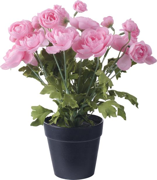 Ranunkel i kruka H29 cm, rosa, konstgjord