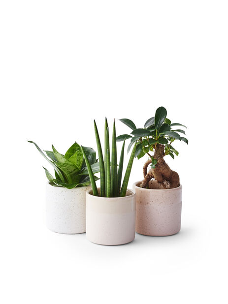 Grönväxtmix lättskötta mini