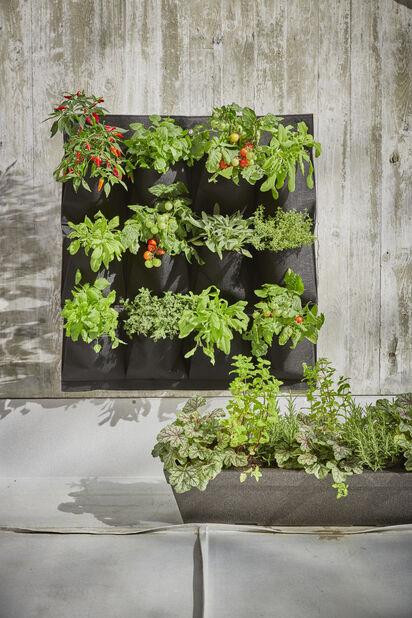 Marwin odlingsficka vägg, Svart