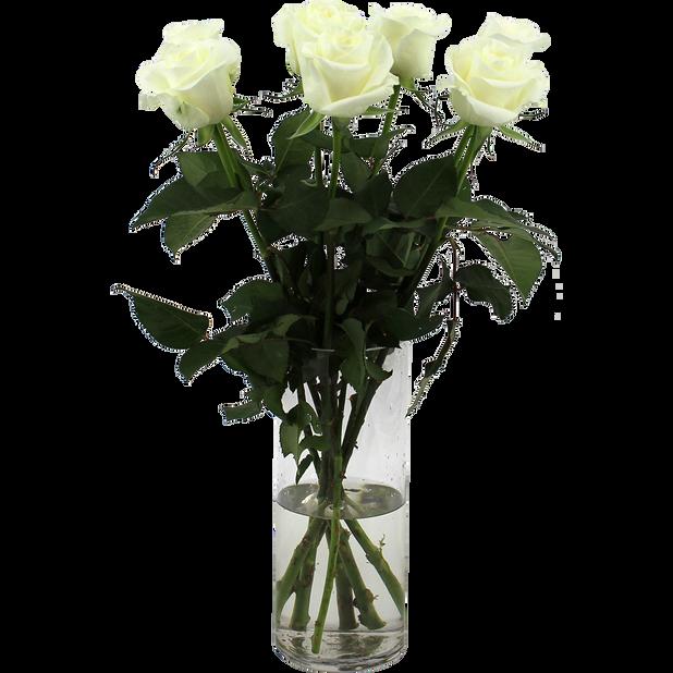 Rosor, Höjd 50 cm, Vit