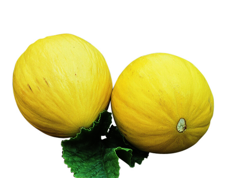 Honungsmelon 'Sweet Heart', Ø10.5 cm, Orange