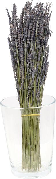Lavendel torkad, Höjd 50 cm, Blå