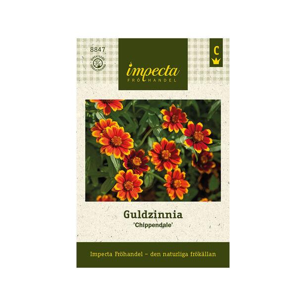 Guldzinnia 'Chippendale', Röd