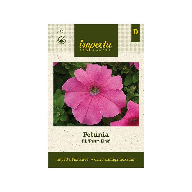 Petunia F1 'Prism Pink', Rosa