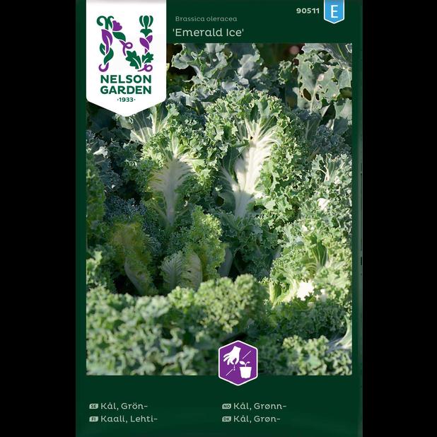 Grönkål 'Emerald Ice', Flerfärgad