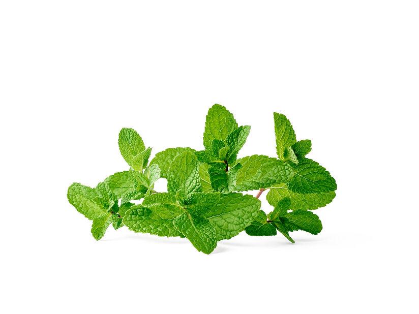 Grönmynta, Ø14 cm, Grön
