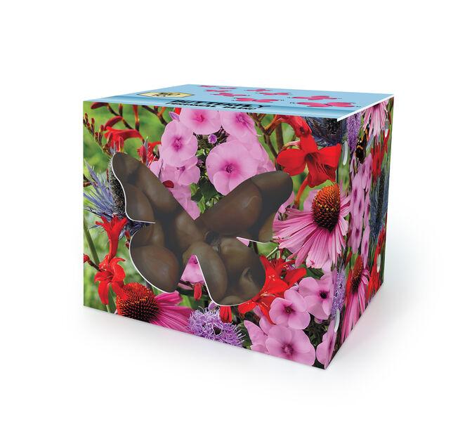 Blomsterknölar för fjärilar, Flerfärgad