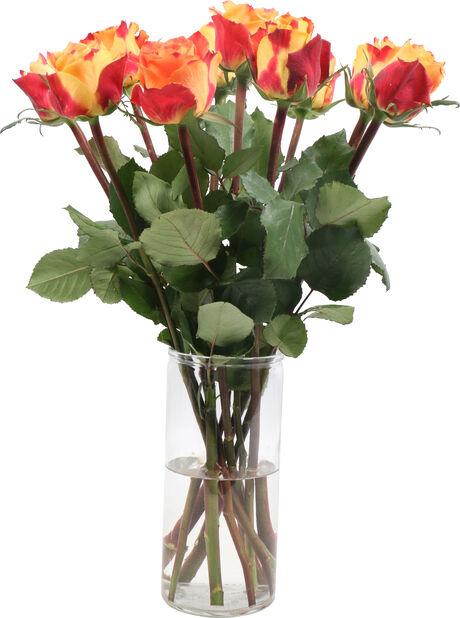 Rosor premium 10-pack, Höjd 50 cm, Flerfärgad