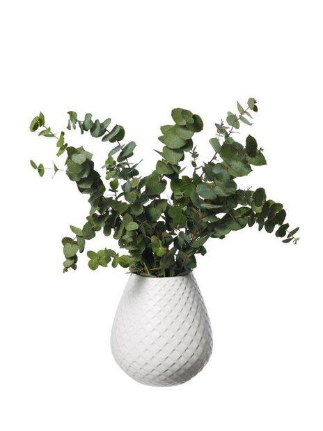 Eukalyptus 5-pack, Höjd 50 cm, Grön