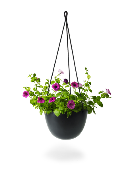 Petunia storblommig, Ø25 cm, Lila