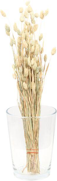 Kanariegräs, Höjd 50 cm, Brun