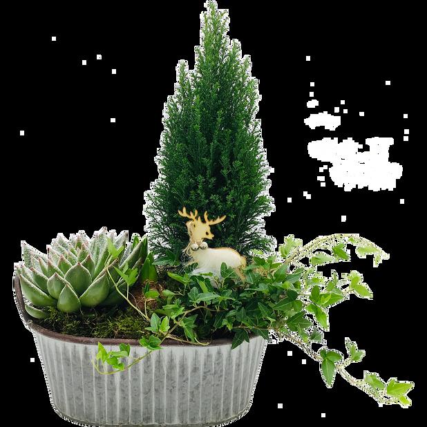 Växtgrupp Olof