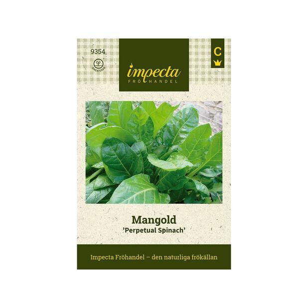 Mangold 'Perpetual Spinach', Grön