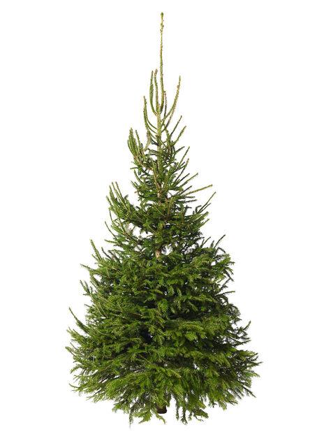 Julgran, Höjd 175-200 cm, Grön