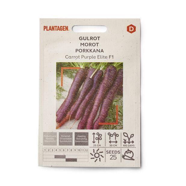 Morot 'Carrot Purple Elite F1'