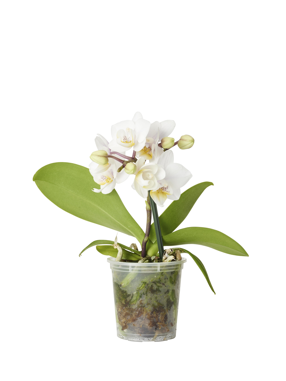 orkidejord plantagen