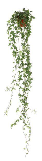 Murgröna 11 cm