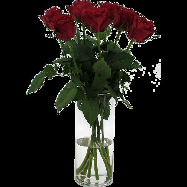 Rosor 7-pack Fairtrade, Höjd 50 cm, Röd