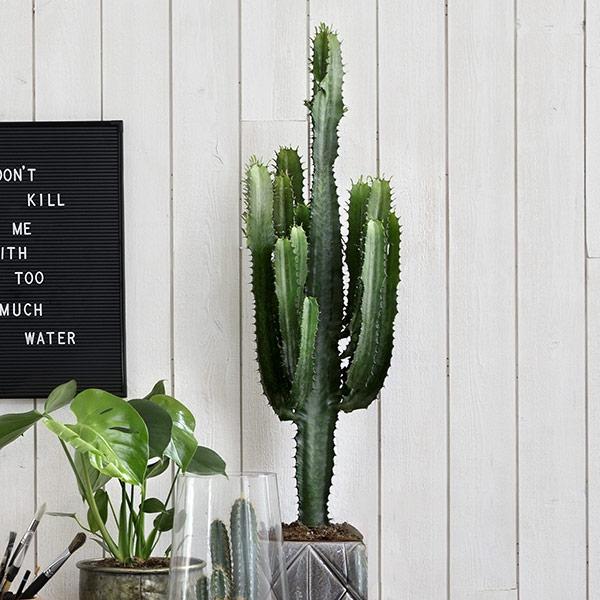 Kaktus som present