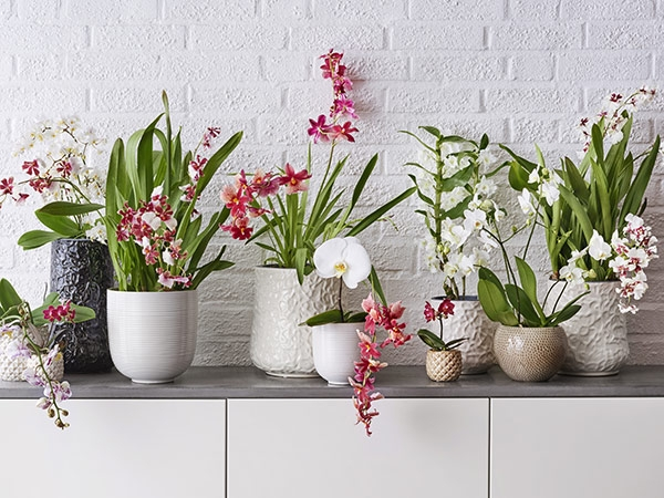 Orkidé som present