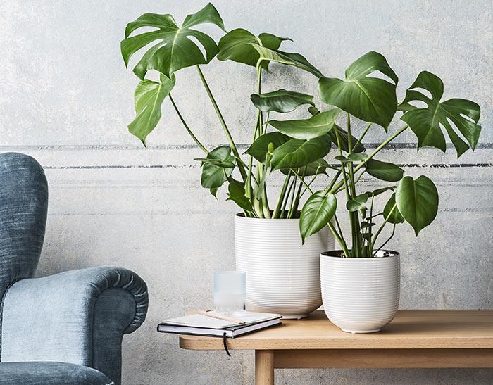 grön växt med stora blad