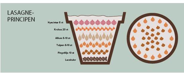 Lasagneprincipen