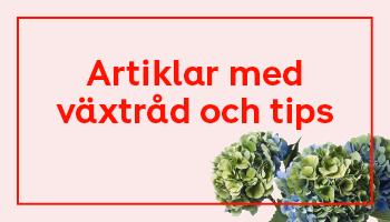 Växtråd & tips