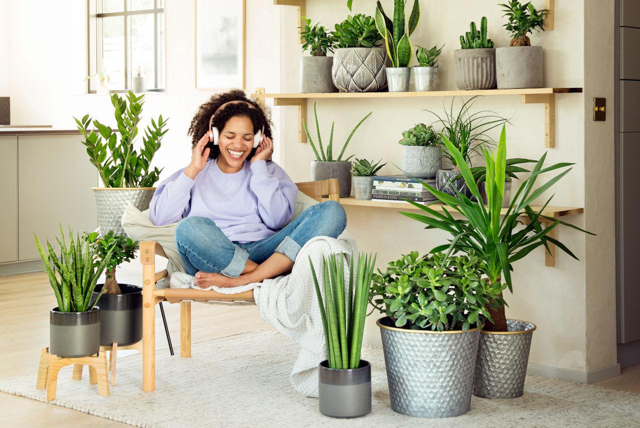köpa trädgårdsväxter online